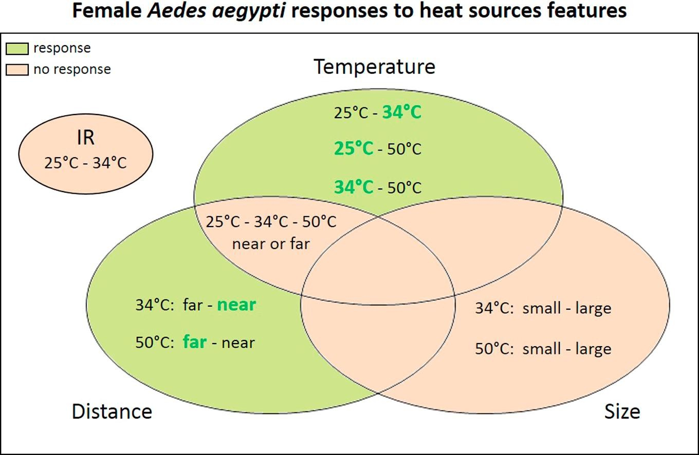 蚊子-heat.jpg
