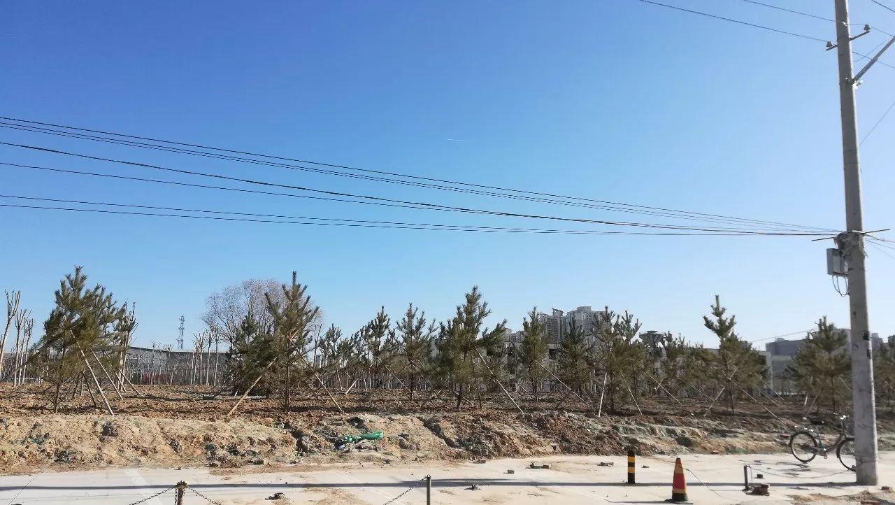 北京昌平区北七家镇东三旗村已被还绿地段