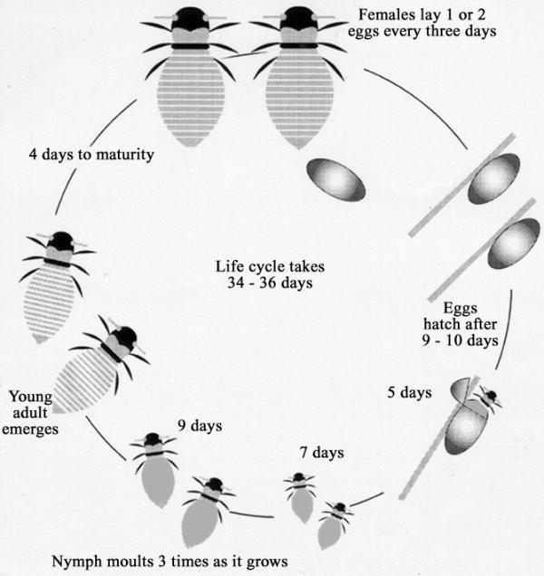雅思写作小作文范文 雅思写作流程图flow chart 蜜蜂生命周期