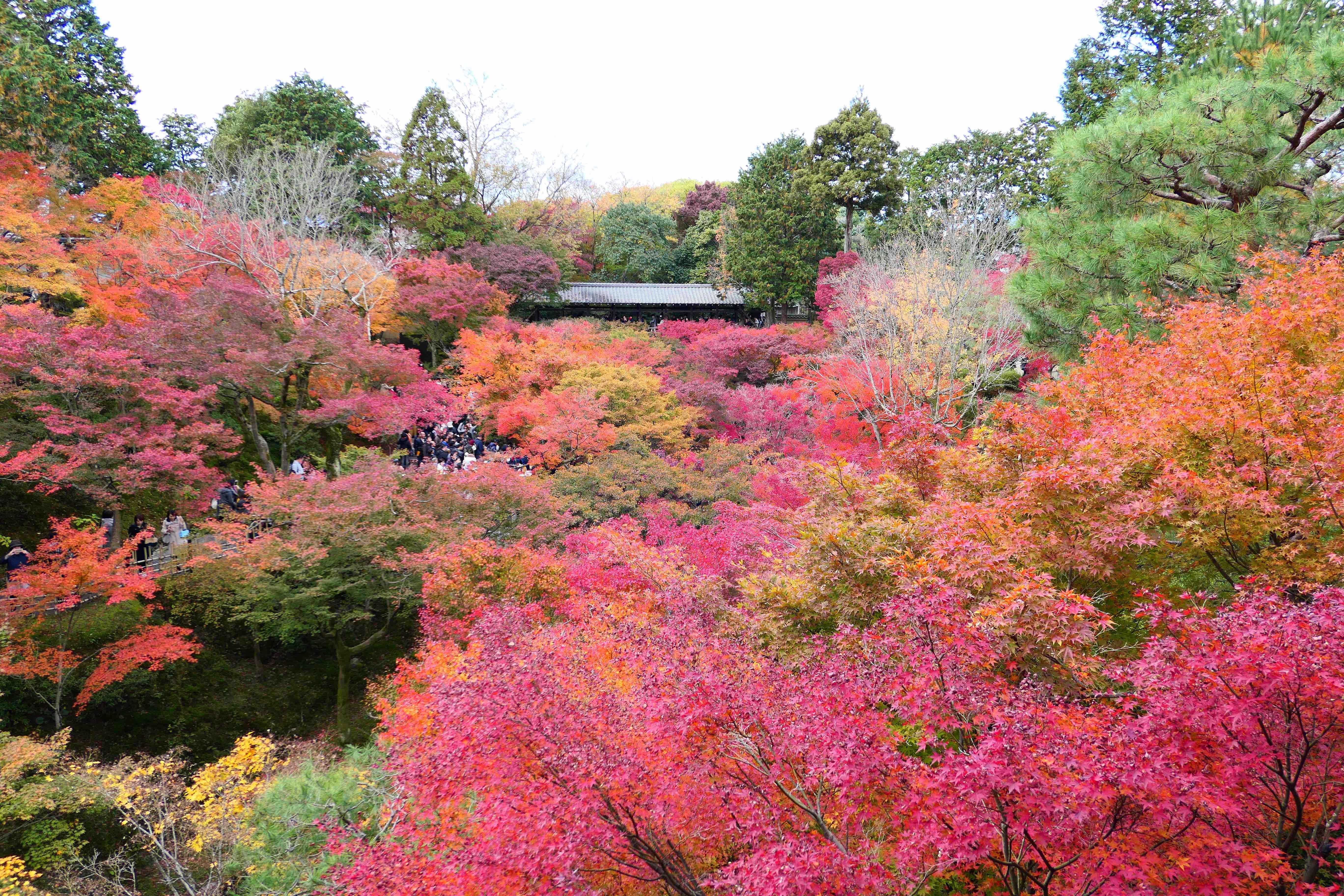 深秋的京都东福寺