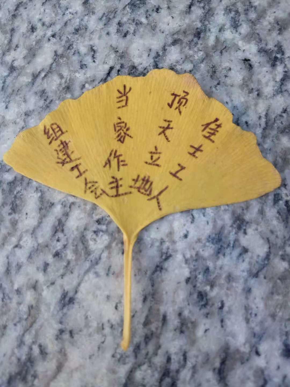树叶2.jpg