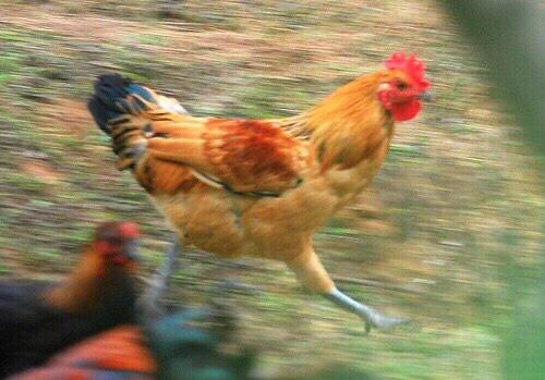 发现男友手机上存了很多鸡视频【原图无水印】你们要的鸡,哈哈哈哈哈 ????
