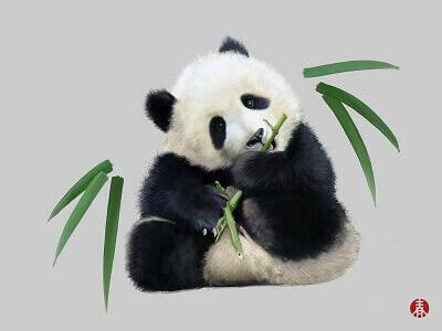 四川 成都/大熊猫繁育研究基地