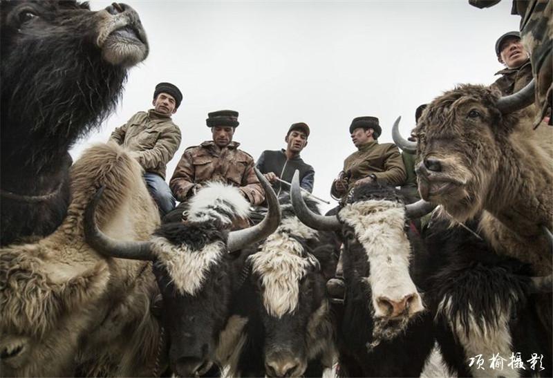 肖贡巴哈尔-叼羊 (5).jpg