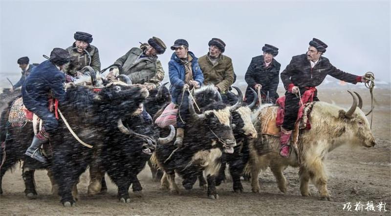 肖贡巴哈尔-叼羊 (6).jpg