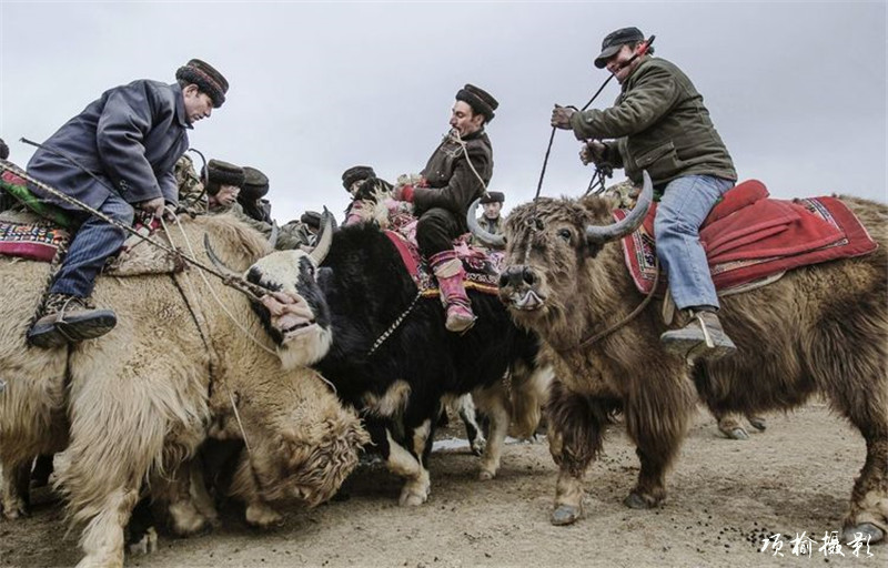 肖贡巴哈尔-叼羊 (3).jpg