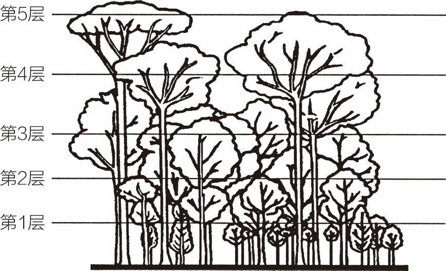 热带雨林里的5层植物