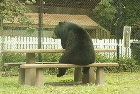 foto de um urso desolado
