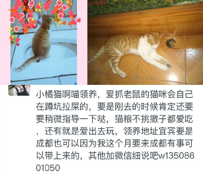 宠物领养4.8 (4).jpg