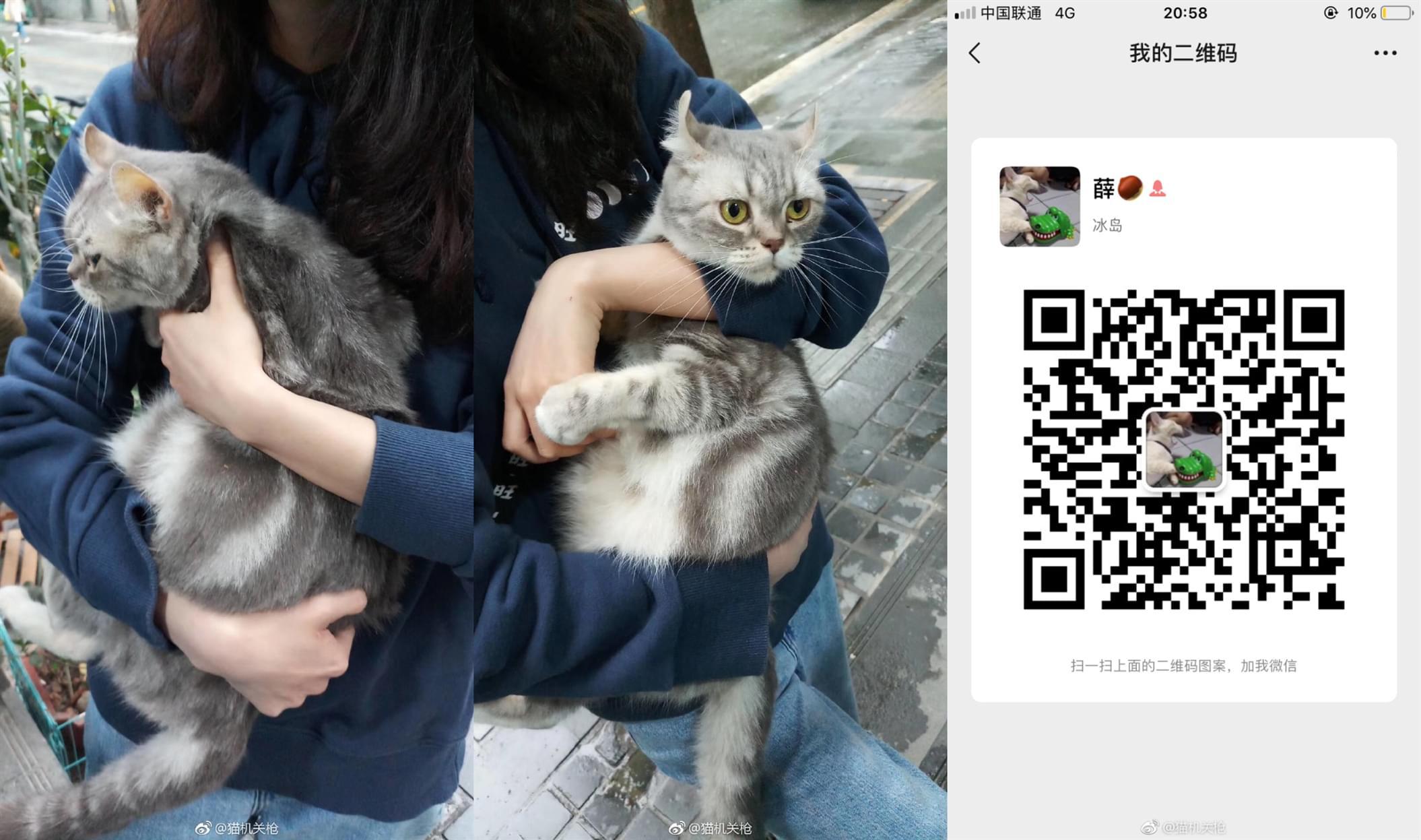 宠物领养4.10 (7).jpg