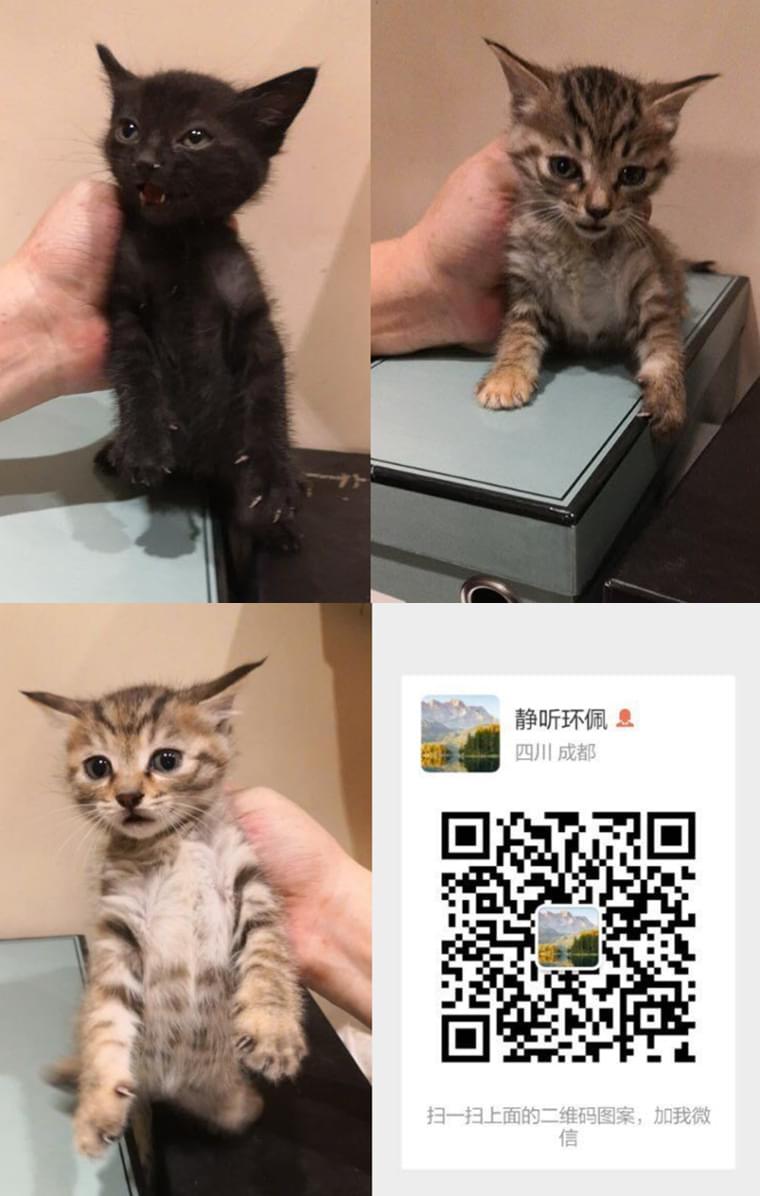 成都宠物4.11 (4).jpg