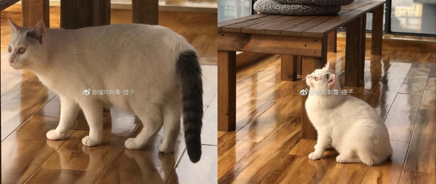 成都宠物4.11 (5).jpg