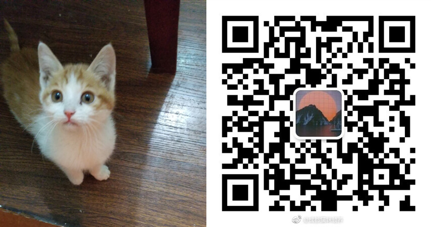 领养宠物4.17 (2).jpg