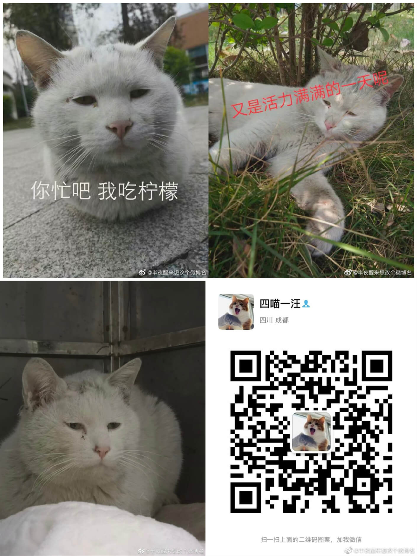 领养宠物4.17 (3).jpg