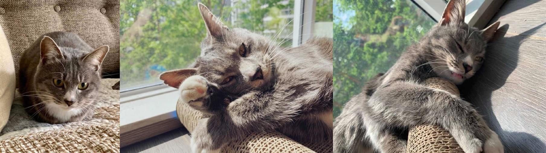 领养猫咪 (2).jpg