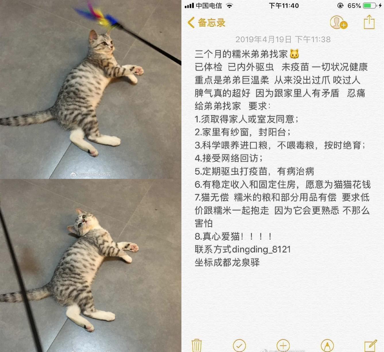 领养猫咪 (4).jpg