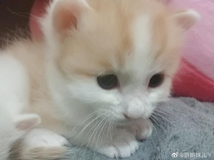 成都宠物领养之家4.25 (7).jpg