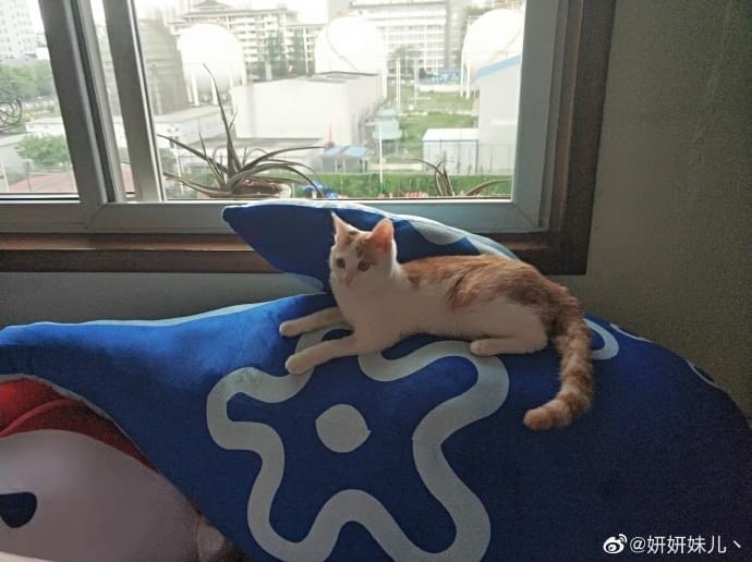 成都宠物领养之家4.25 (6).jpg