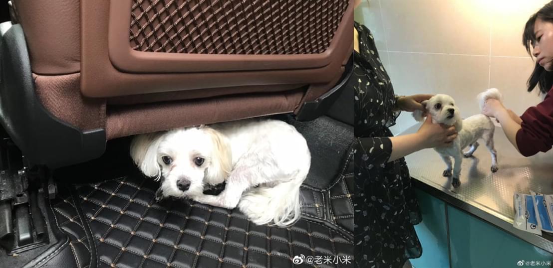 成都宠物领养之家4.25 (3).jpg
