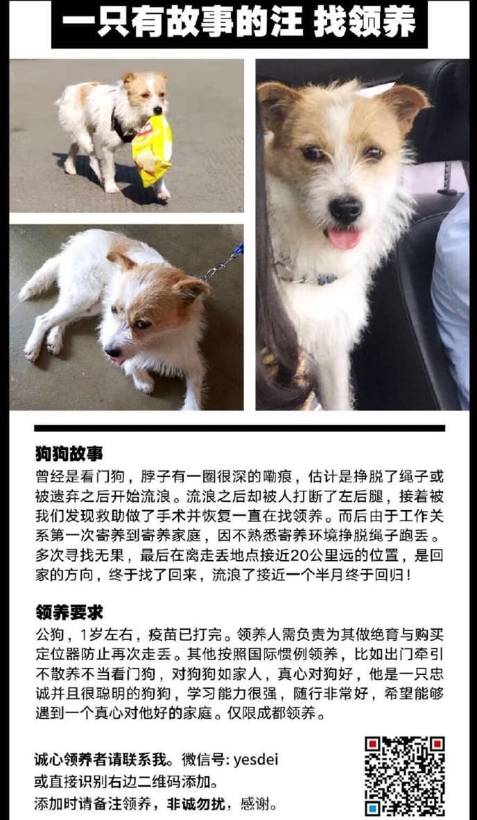 成都宠物领养之家4.25 (1).jpg