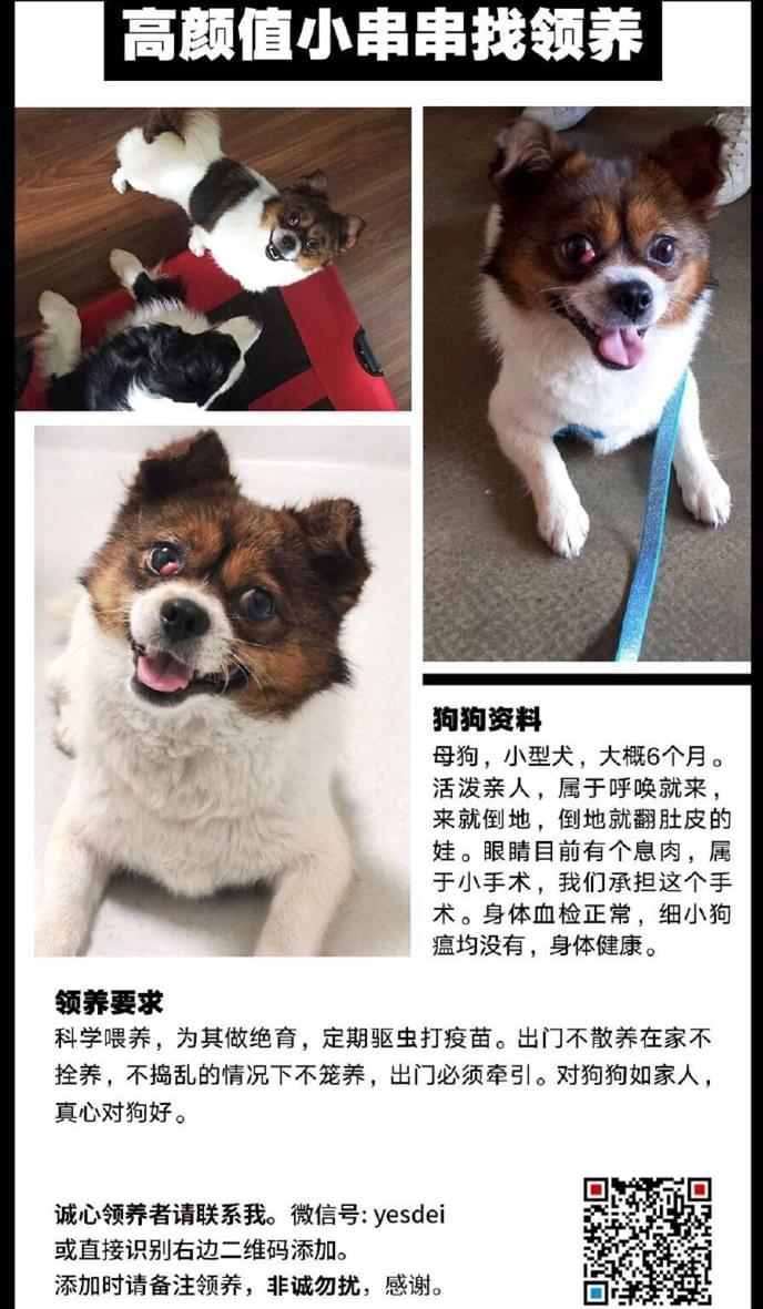 成都宠物领养之家4.25 (10).jpg