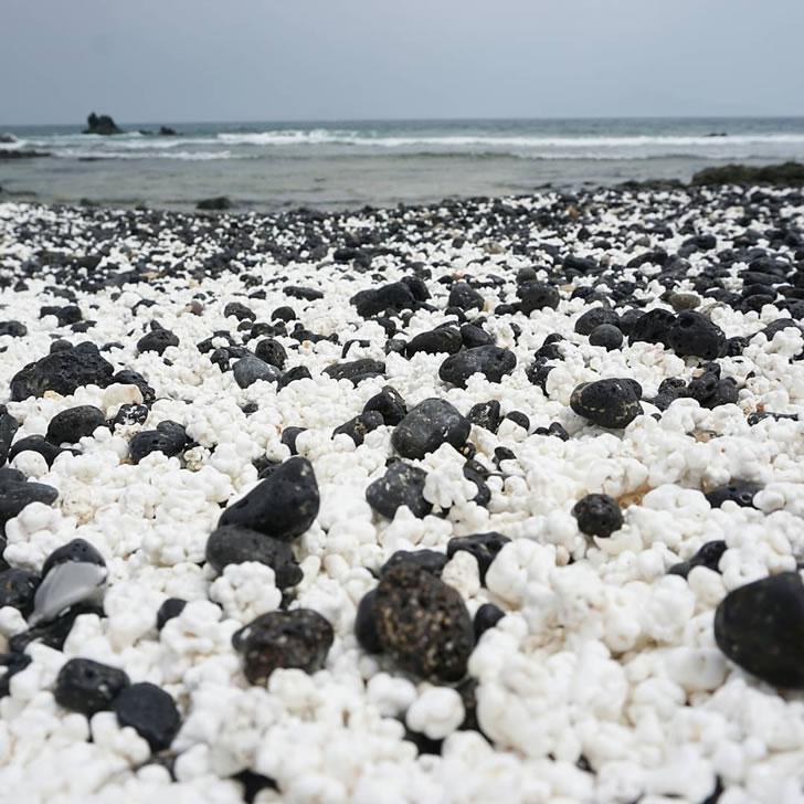 """一条美丽的海岸线,铺满了数百万颗""""爆米花""""-2"""