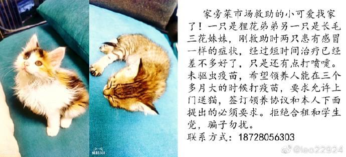 成都宠物领养之家4.28 (2).jpg