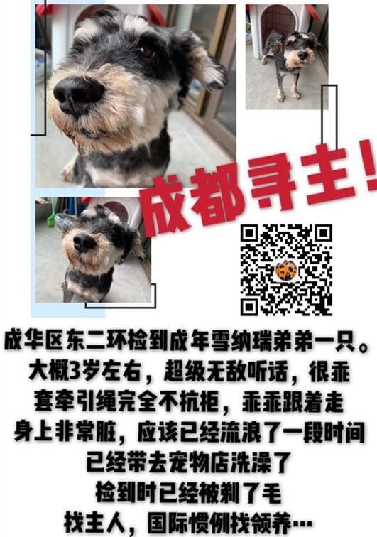 成都宠物领养之家4.28 (7).jpg