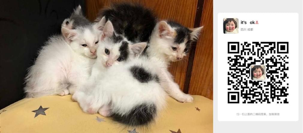 领养猫咪5.1 (4).jpg