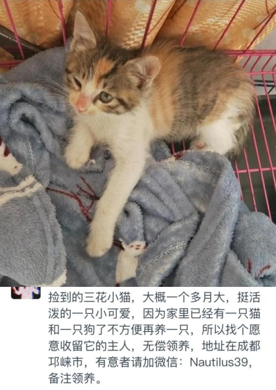 领养猫咪5.1 (3).jpg