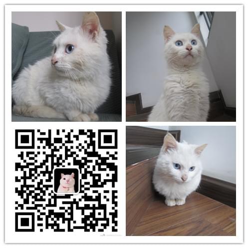 成都猫咪领养 5.6 (6).jpg