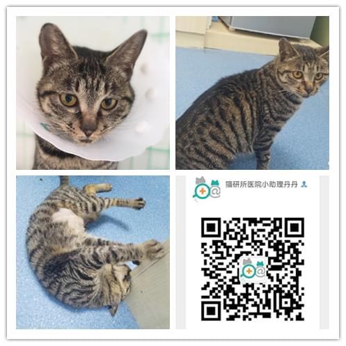 成都宠物救助5.8 (9).jpg