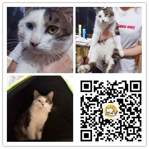 成都宠物救助5.8 (8).jpg