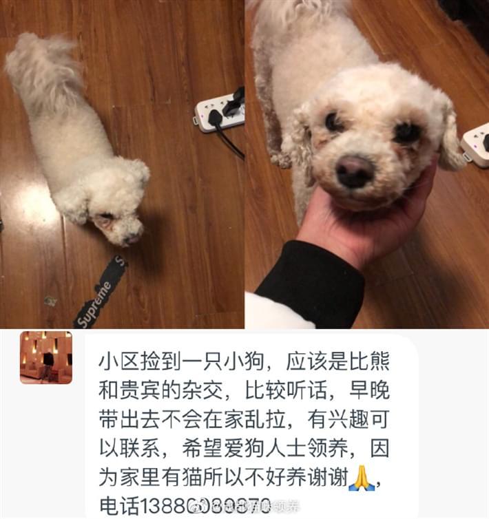 成都宠物救助5.8 (1).jpg
