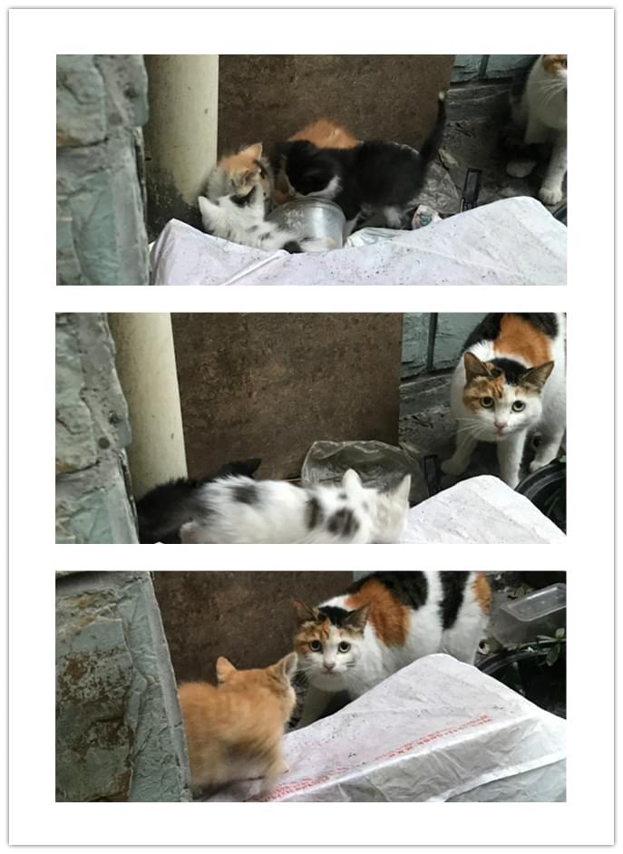 宠物领养5.10 (10).jpg