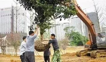 绿化苗木移植、运输、修剪、养护技术全收录
