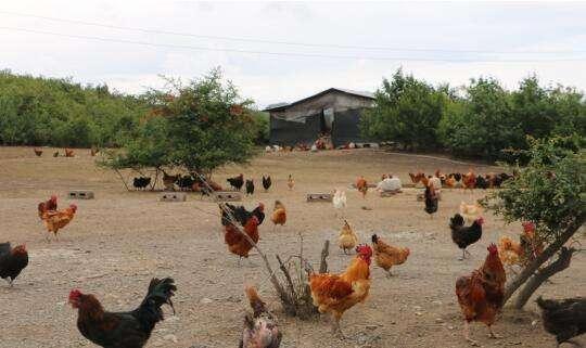 张律师说法:农业用地上搭建养殖场属于违章建筑吗?