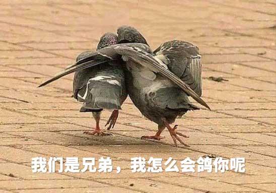 我们是兄弟,我怎么会鸽你呢