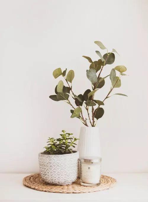 香樟树下朗读者——No.41做一片美的叶子