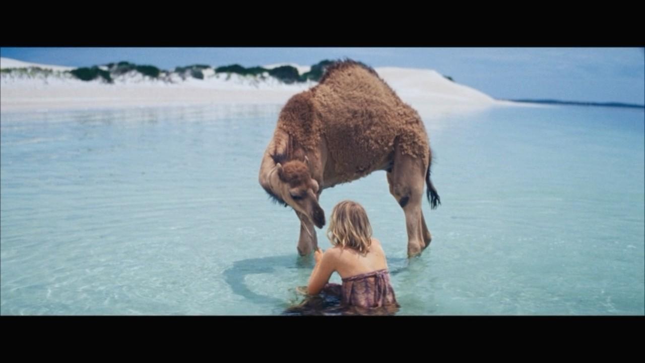 骆驼可以到达它想去的任何地方——