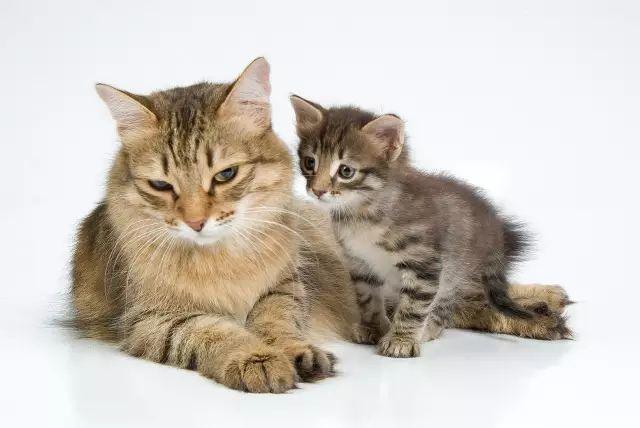 猫咪哪些情况,不宜接种疫苗?