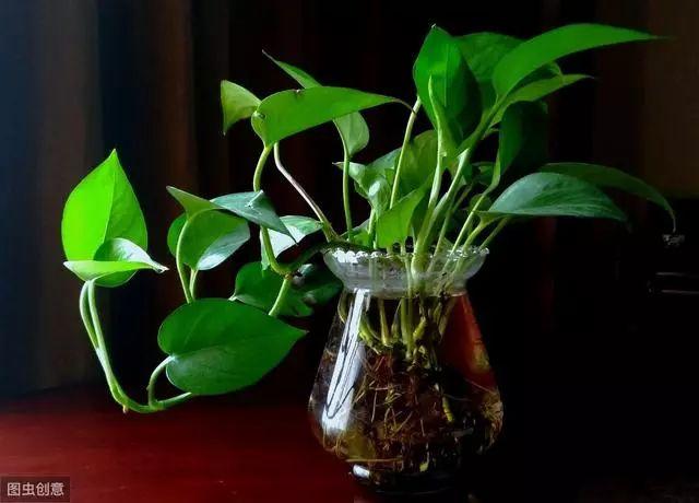 水培植物养殖易犯5个错误,很多人都不知道,难怪养啥都养不好