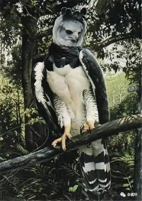 都在说鸟,啥玩意?