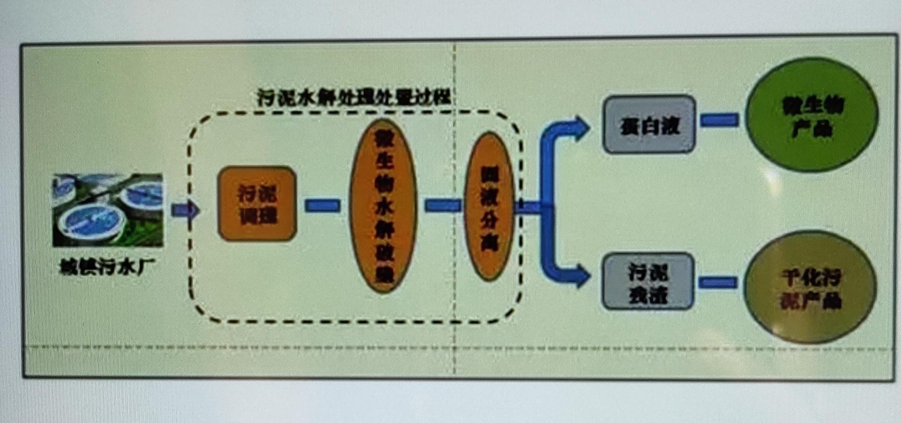 微生物蛋白提取流程图