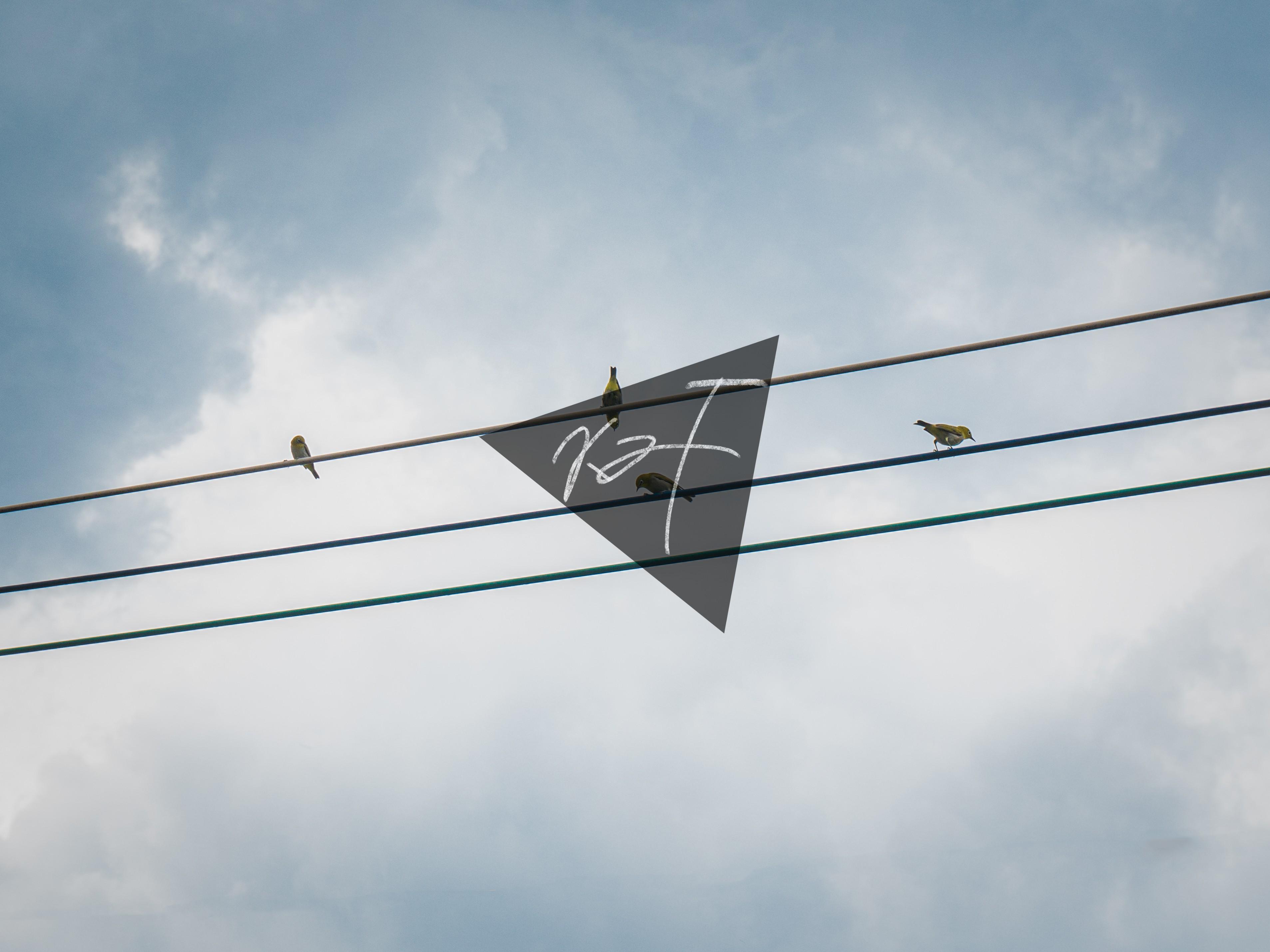 20190707-电线小鸟-min.jpg