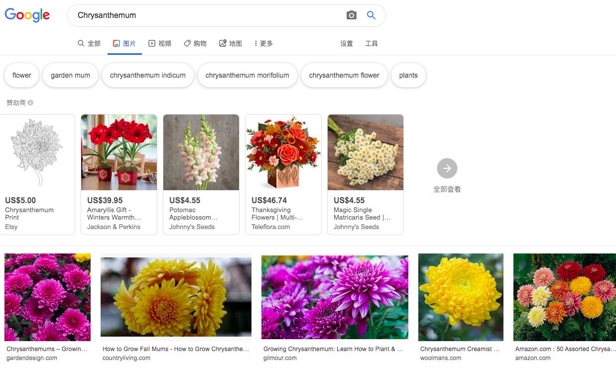 谷歌搜索菊花