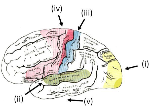 colored_brain