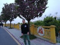 我在樱花树下