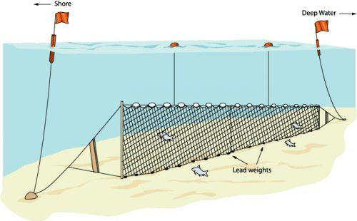 Salmon-Gillnetting.jpg
