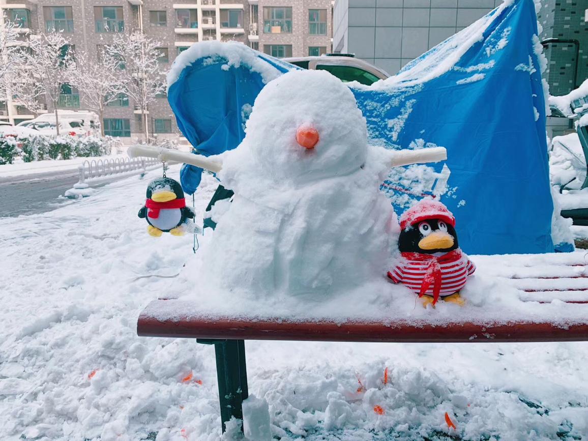 室友拍的雪企鹅.jpg